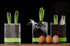 Drei Eier drei Frühlings-Blumen Lizenzfreie Stockfotos