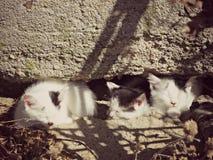 Drei ein Sonnenbad nehmende Kätzchen u. x28; color& x29; Lizenzfreie Stockfotos