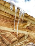 Drei Eiszapfen, die auf dem Dach mit fallendem Wassertropfen schmelzen stockbild