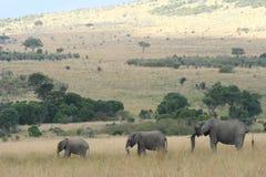 Drei Elefanten, die durch Masai Mara wandern Lizenzfreie Stockfotos