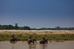 Drei Elefanten und Mitfahrer, die den Fluss hinuntergehen Lizenzfreie Stockfotos