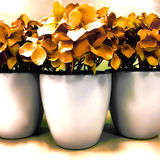Drei Emailtöpfe mit Trockenblumen Lizenzfreie Stockfotos