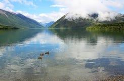 Drei Enten auf Rotoiti See lizenzfreies stockbild