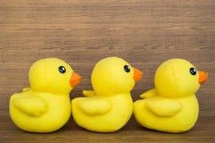 Drei Enten, die in eine Linie, Reihe warten Lizenzfreies Stockbild