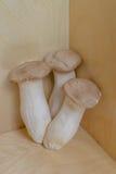Drei Eringi-Pilze Stockfotografie