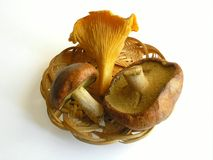 Drei essbare funguss im Korb Stockfoto