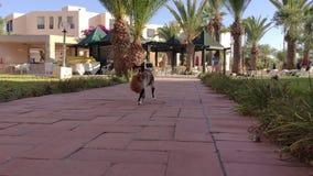 Drei färbten die Katze, die im Mundingwerkätzchen beim Tragen im Freien hält Mutterkatze mit Babykätzchen stock video