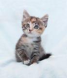 Drei-Farbgestreiftes Kätzchen, das oben schaut Stockbild