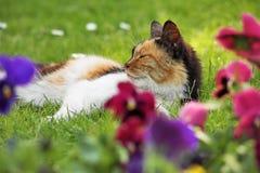 Drei-farbige Katze auf dem Gras mit Blumen Stockfotografie