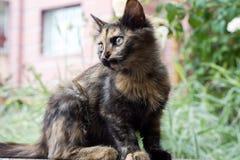 Drei farbige Katze auf Straßenhintergrund Stockbild