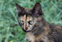 Drei farbige Katze auf Straßenhintergrund Lizenzfreie Stockbilder