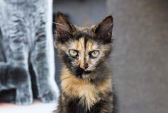 Drei farbige Katze auf Straßenhintergrund Stockfotografie