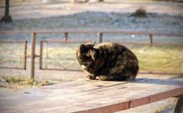 Drei-farbige Katze, die auf einer Bank sitzt lizenzfreie stockfotos