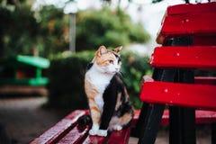Drei farbige Katze, die auf einer Bank sitzt stockfotografie