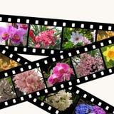 Drei filmstrips der Blumen getrennt auf Weiß Stockbild