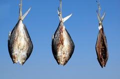 Drei Fisch-Trockner im Sun Stockbild