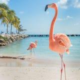 Drei Flamingos auf dem Strand stockfotos