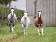 Drei Fohlen stockfoto