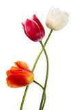 Drei Frühlingsblumen Lizenzfreie Stockfotos