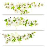 Drei Frühlingsfahnen mit blühendem Baum-Brunch Stockbild