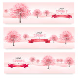 Drei Frühlingsfahnen mit blühenden Kirschblüte-Bäumen. Lizenzfreies Stockfoto