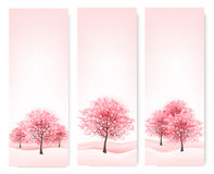 Drei Frühlingsfahnen mit blühenden Kirschblüte-Bäumen. Stockfotos