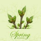 Drei Frühlingszweige Stockbilder