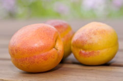 Drei frische Aprikosen lizenzfreie stockfotografie
