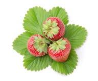 Drei frische Erdbeeren mit Blättern Stockbild