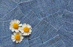 Drei Gänseblümchen auf Blue Jeans Lizenzfreie Stockfotos