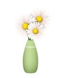 Drei Gänseblümchen in einem grünen Vase Lizenzfreies Stockbild