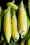 Drei gedämpfter Mais Stockfotos