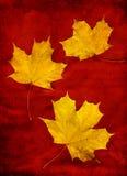 Drei gelbe Blätter Lizenzfreie Stockfotografie