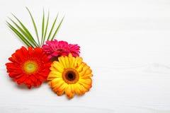 Drei Gerberablumen auf weißem Holztisch Frühlingsdekoration mit Gänseblümchenblume Lizenzfreie Stockfotografie