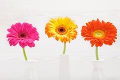 Drei Gerberablumen im Vase auf weißem Holztisch Gänseblümchenblume im Vase Lizenzfreie Stockfotos