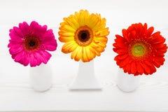Drei Gerberablumen im Vase auf weißem Holztisch Gänseblümchenblume im Vase Lizenzfreie Stockbilder