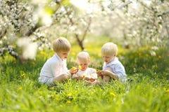 Drei glückliche kleine Kinder, die Blumen in der Wiese auswählen lizenzfreies stockbild