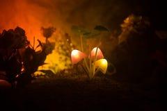 Drei glühende Pilze der Fantasie in der dunklen Nahaufnahme des Geheimnisses Wald Schöner Makroschuß des magischen Pilzes oder dr Lizenzfreie Stockfotografie