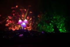 Drei glühende Pilze der Fantasie in der dunklen Nahaufnahme des Geheimnisses Wald Schöner Makroschuß des magischen Pilzes oder dr Lizenzfreie Stockbilder