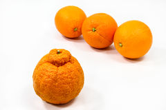 Orange Eigenartigkeit Lizenzfreie Stockfotografie