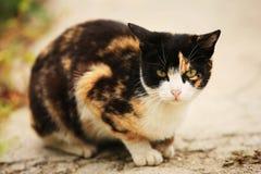 Drei glückliche Katzen der Farbe Stockfotografie