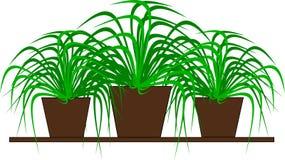 Drei grüne Topfpflanzen für Dekoration Lizenzfreie Stockfotografie