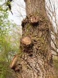 Drei Griffe auf Brown-Baumrinde-Makro des hohen Details und des Nizza Cla Stockfotos