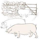 Drei große Schweine am Tor Lizenzfreie Stockbilder