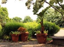 Drei große Terrakotta-Pflanzer im Garten stockfotos