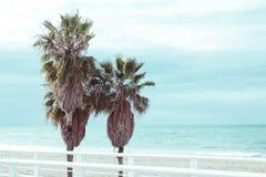 Drei große tropische Palmen gegen das Meer und das blaue azuree stockfotografie