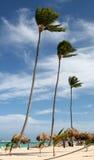 Drei hohe Palmen stockfotografie