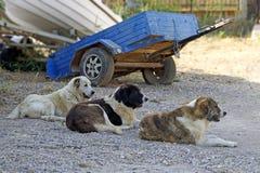 Drei Hunde in der Reihe Stockbild