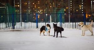 Drei Hunde, die am Spielplatz in der Nacht spielen Sie schauen miteinander stockfoto