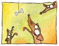 Drei Hunde und ein Knochen Stockfoto